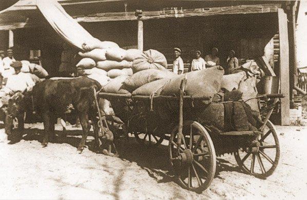 Przymusowa dostawa zboża do punktu skupu w Kaharłyku na Kijowszczyźnie w 1932 r.