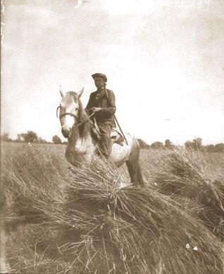 Komsomolec Iwan Kubenko konno patrolujący kołchozowe pola wczasie żniw w1932 r.