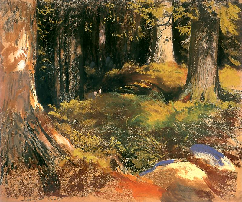 Las w Zakopanem w słońcu