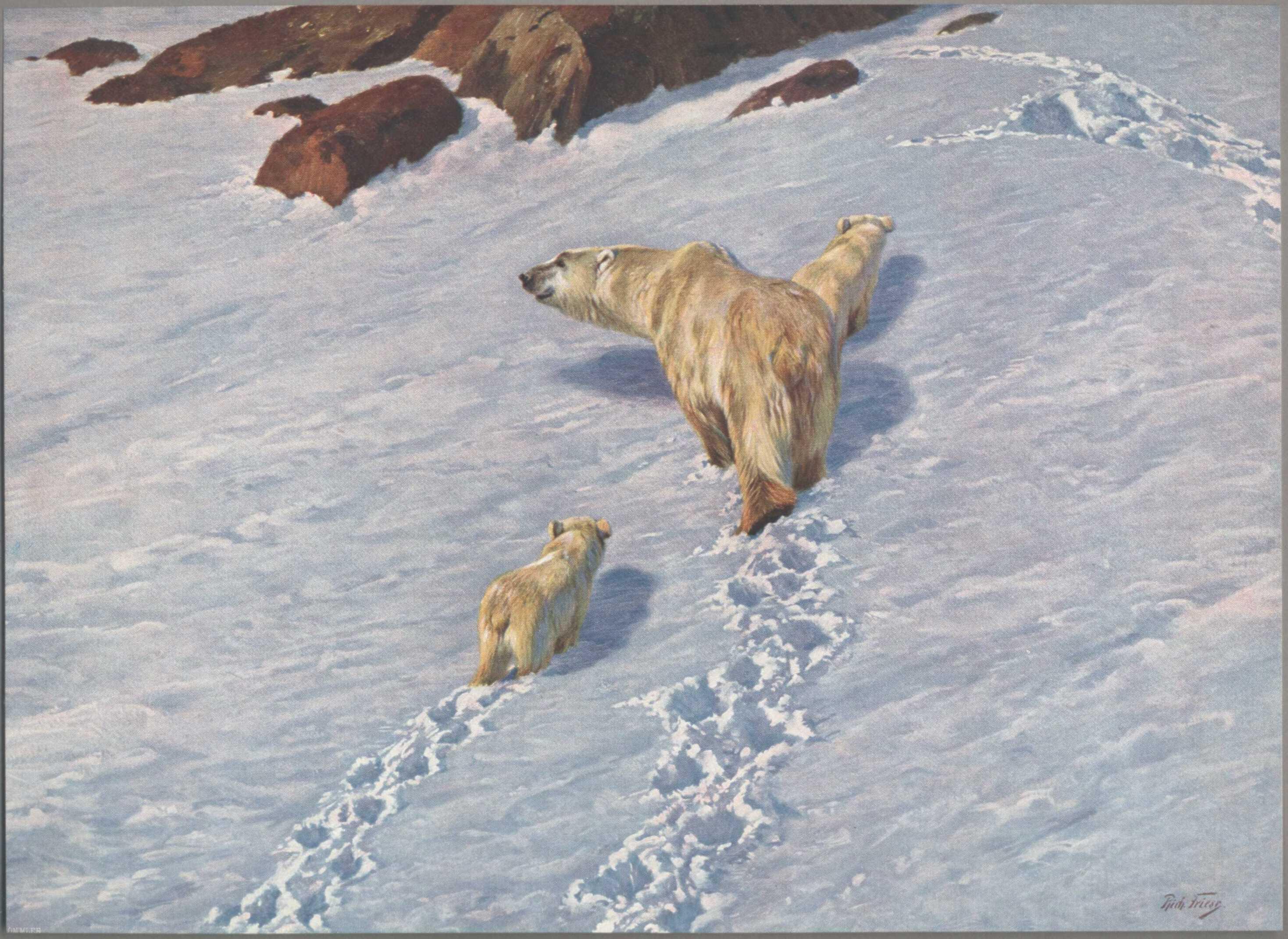 """obraz: Richard Friese i """"Eisbären mit zwei Jungen in Schneelandschaft"""" (Niedźwiedzie polarne z dwoma młodymi na tle śnieżnego krajobrazu"""""""
