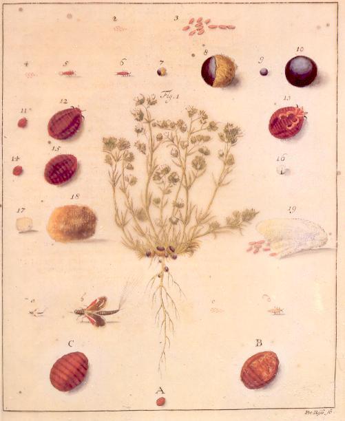 Portret Łukasza Opalińskiego w magnackim stroju, do którego zabarwienia z pewnością używano wytwarzanego rodzimie barwnika.