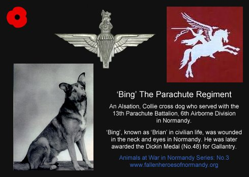 fot. fallenheroesofnormandy.wordpress.com/animals-at-war-in-normandy/